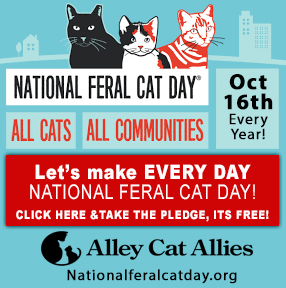 National Feral Cat Day Alley Cat Allies