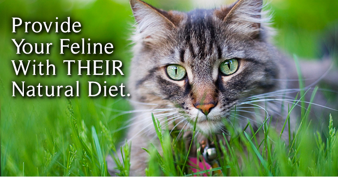 Provide Your Feline with Their Natural Diet - Raw Cat Food